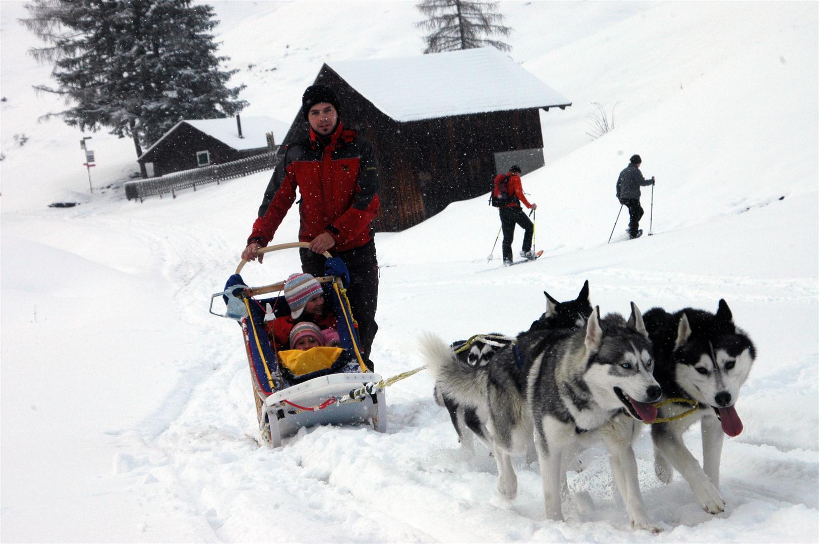 DSC_0373-niko von arctic wolf kennel gespann (Large)