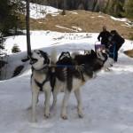 Husky Day DSC_3105 (Large)