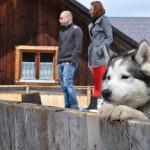 Husky Day DSC_3108 (Large)